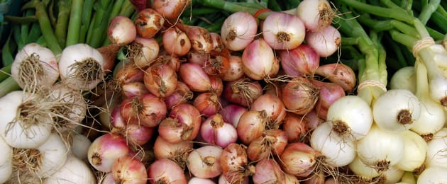 Different Kinds of Onion