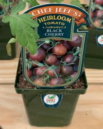 Black Cherry Tomatoes