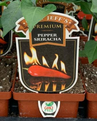 Sriracha Peppers