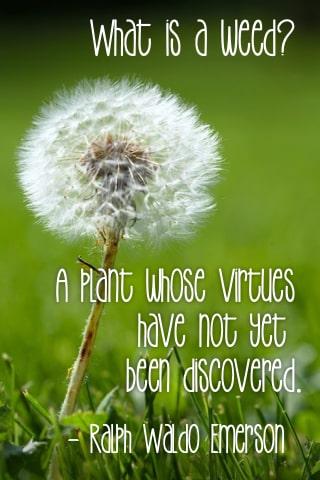 weed virtue