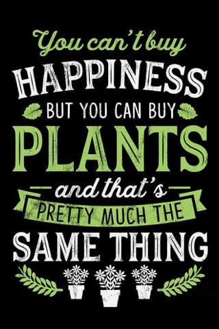 plant saying